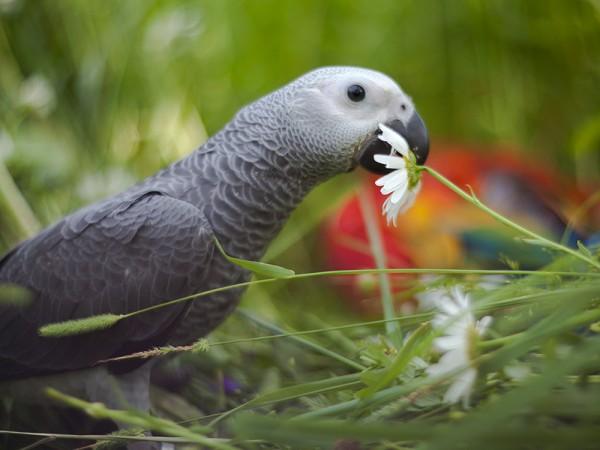 Корма и лакомства для крупных попугаев