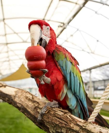 игрушки KONG любят даже попугаи))