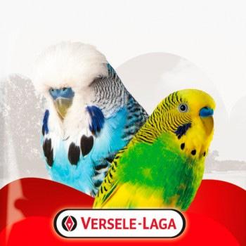 VERSELE-LAGA (24)