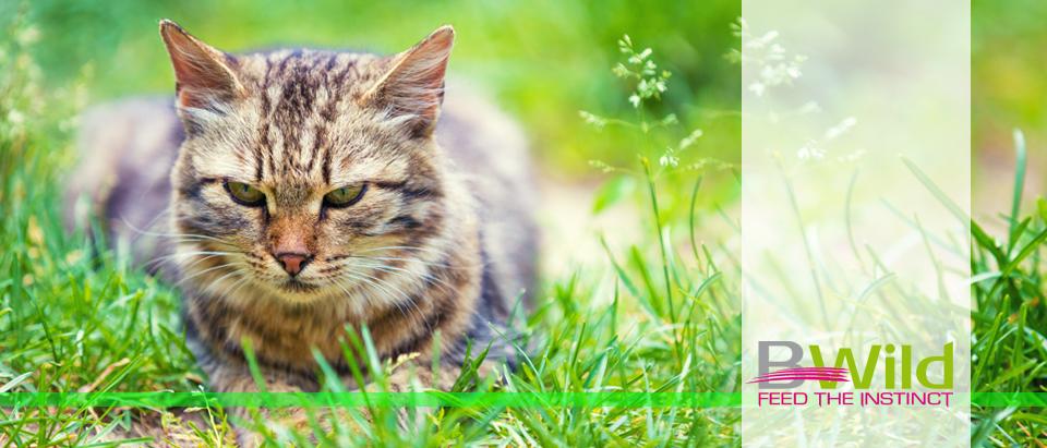 Сухие корма Monge BWild Cat в Калининграде